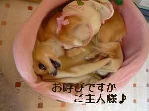 blog2008032301.jpg