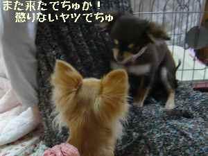 blog2008032404.jpg