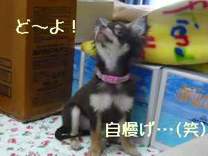blog2008032406.jpg