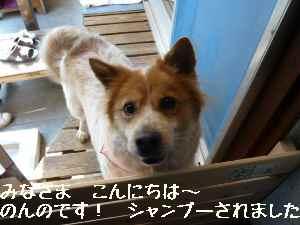 blog2008032701.jpg
