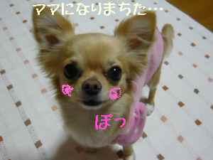 blog2008032703.jpg
