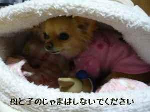 blog2008032704.jpg