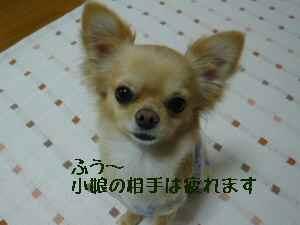 blog2008033101.jpg