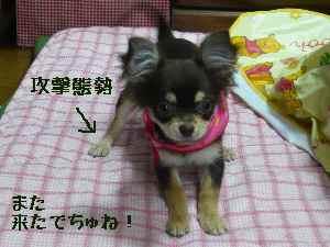 blog2008033102.jpg