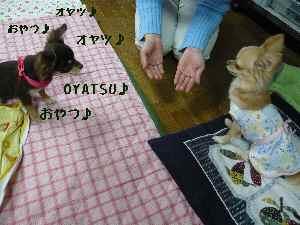 blog2008033103.jpg