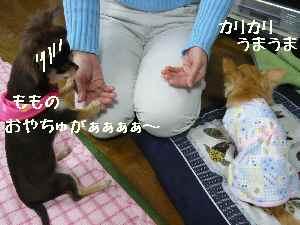 blog2008033104.jpg