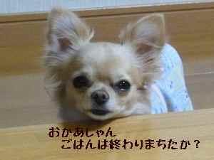blog2008040101.jpg