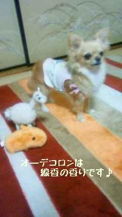blog2008041102.jpg