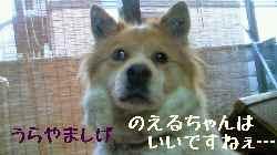 blog2008041403.jpg