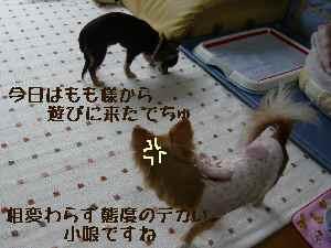blog2008041703.jpg