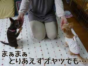 blog2008041704.jpg