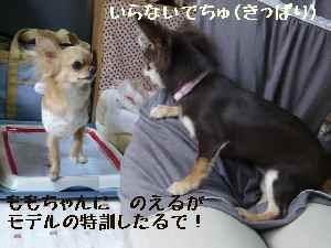 blog2008041705.jpg