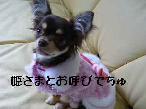 blog2008041706.jpg