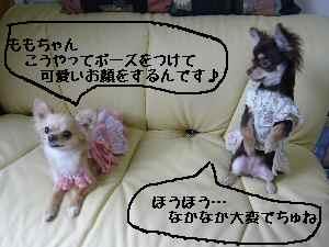 blog2008041707.jpg