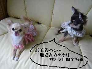 blog2008041708.jpg