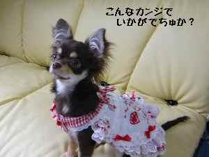 blog2008041709.jpg