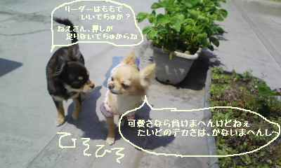 blog2008042501.jpg