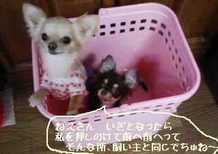 blog2008042503.jpg
