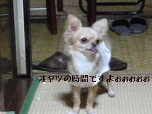 blog20080429.jpg