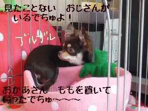 blog2008050403.jpg