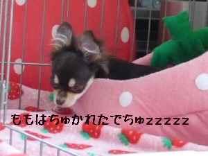 blog2008050407.jpg