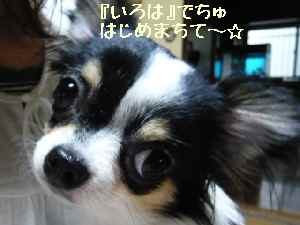 blog2008050408.jpg