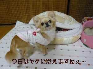 blog2008051001.jpg