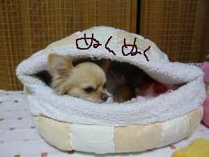 blog2008051002.jpg