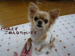 blog2008051302.jpg
