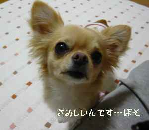 blog2008051503.jpg