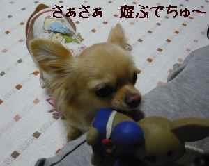 blog2008051504.jpg