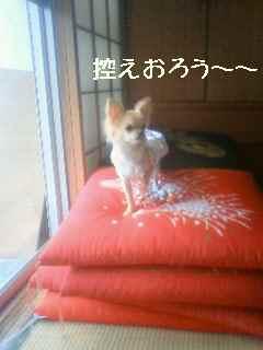 blog2008051901.jpg
