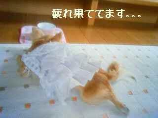 blog2008051902.jpg