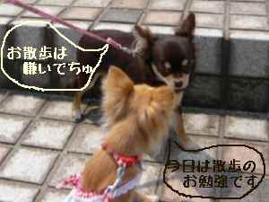 blog2008052201.jpg
