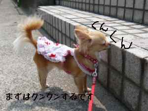 blog2008052202.jpg