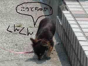 blog2008052203.jpg