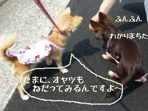 blog2008052204.jpg