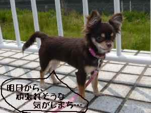 blog2008052205.jpg
