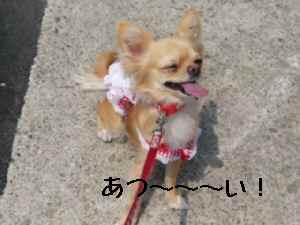 blog2008052206.jpg