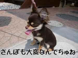 blog2008052207.jpg