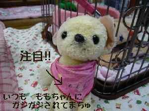 blog2008052209.jpg