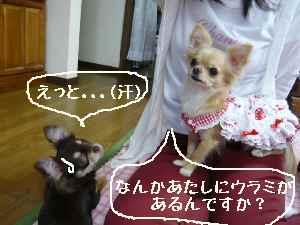 blog2008052210.jpg