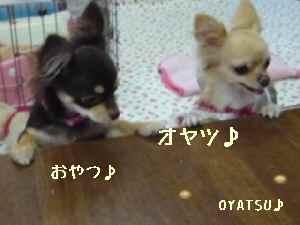 blog2008052212.jpg
