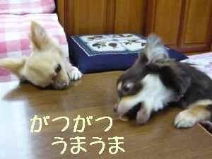 blog2008052213.jpg