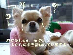 blog2008052601.jpg