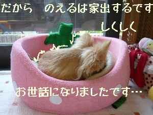 blog2008052602.jpg