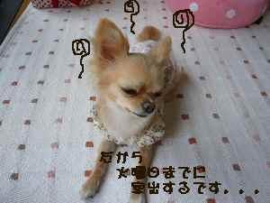 blog2008052702.jpg