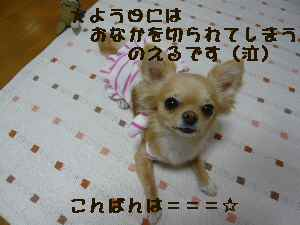 blog20080528.jpg