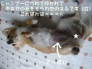 blog2008052901.jpg