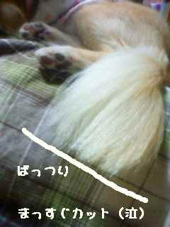blog2008052902.jpg